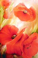 Annette-Schmucker-Pflanzen-Blumen