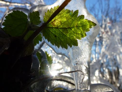 Renu G., November, Natur: Wasser, Land-Art