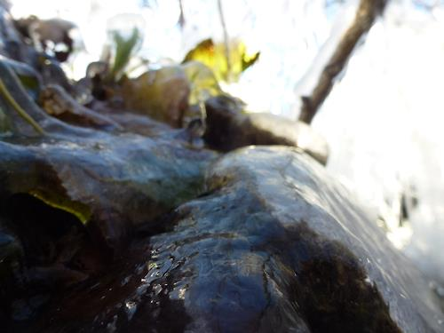 Renu G., November, Landschaft: Herbst, Gefühle: Freude, Romantik