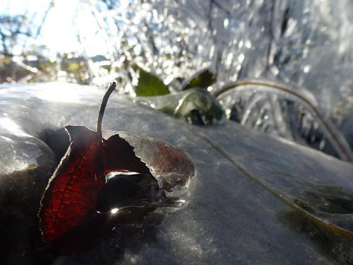 Renu G., November, Landschaft: Herbst, Gefühle: Freude, Expressionismus