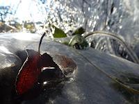 Renu-G-Landschaft-Herbst-Gefuehle-Freude