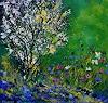 pol ledent, My garden in spring