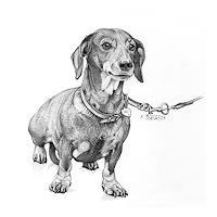 E.Oesterle, Der Dachsghund