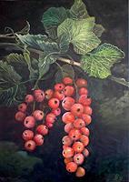 G. Hofmann, Johannisbeere (Ribes rubrum)