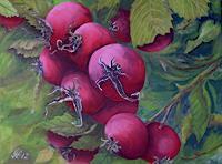 Guenther-Hofmann-Pflanzen-Fruechte