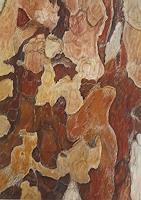 Theresia-Zuellig-Natur-Diverse-Pflanzen-Baeume-Moderne-Naturalismus