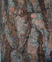 Theresia-Zuellig-Pflanzen-Baeume-Natur-Wald-Moderne-Naturalismus