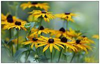 katarina-niksic-Pflanzen-Blumen-Moderne-Andere