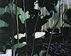 J. Filzen, hinter Bäumen