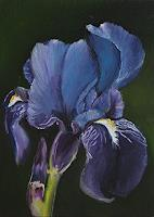 Sabine-Schramm-Pflanzen-Blumen-Gegenwartskunst-Gegenwartskunst