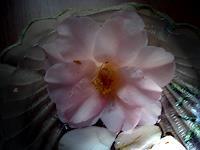 Symphonie-Pflanzen-Blumen-Dekoratives