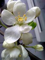 Symphonie-Pflanzen-Blumen