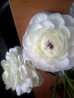 Symphonie-Pflanzen-Blumen-Poesie