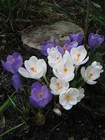 Symphonie-Pflanzen-Blumen-Landschaft-Fruehling