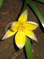 Symphonie-Pflanzen-Blumen-Landschaft-Ebene