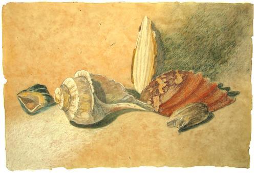 Uwe Thill, Muschelstilleben 2, Stilleben