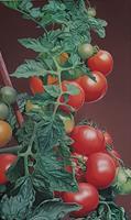 Ralf-Vieweg-1-Pflanzen-Fruechte-Natur-Erde-Moderne-Fotorealismus