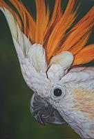 Ralf-Vieweg-1-Tiere-Luft-Natur-Erde-Moderne-Fotorealismus