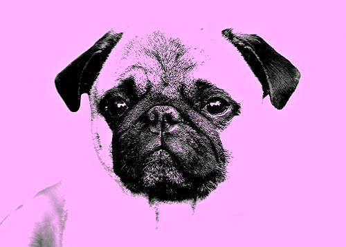 Liona Toussaint, mops puppy pink, Tiere: Land, Dekoratives, Moderne