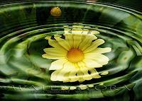 Liona-Toussaint-Pflanzen-Blumen-Zeiten-Sommer