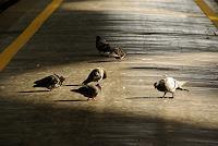 Liona-Toussaint-Tiere-Luft-Diverse-Verkehr