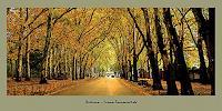 Liona-Toussaint-Wohnen-Stadt-Landschaft-Herbst