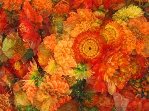 Niko Bayer, Giardino I., Natur: Diverse, Pflanzen: Blumen, Gegenwartskunst, Expressionismus