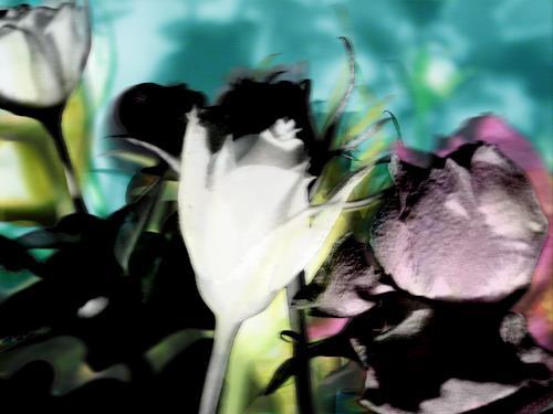 Mia, no rosengarden, Fashion, Abstraktes, Abstrakter Expressionismus