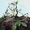 Elke Henning, Blätter in der Erde