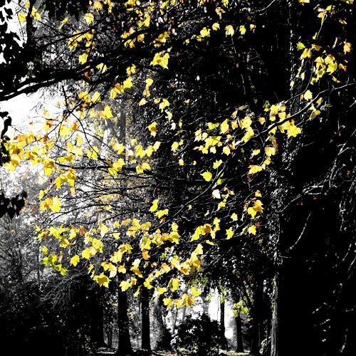 Sandra Robertz, Leaves, Diverse Landschaften, Natur: Wald, Konzeptkunst, Abstrakter Expressionismus