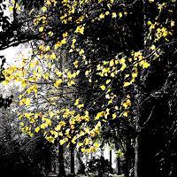 S. Robertz, Leaves