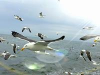 Sandra-Robertz-Landschaft-See-Meer-Natur-Wasser-Moderne-Konzeptkunst