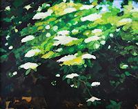 Ulrich-Hollmann-Natur-Wald-Pflanzen-Blumen