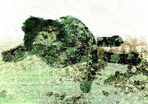 Rotraut Richter, Verschimmelung, Diverse Gefühle, Akt/Erotik: Akt Frau, New Image Painting
