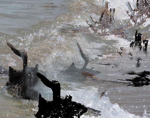 Rotraut Richter, Luttertiere, Situationen, Landschaft: See/Meer, Gegenwartskunst