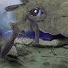 R. Richter, Unterwasserdrama