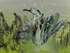 Rotraut Richter, Urvogel