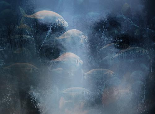 Rotraut Richter, Augenfisch, Fantasie, Poesie, New Image Painting, Abstrakter Expressionismus