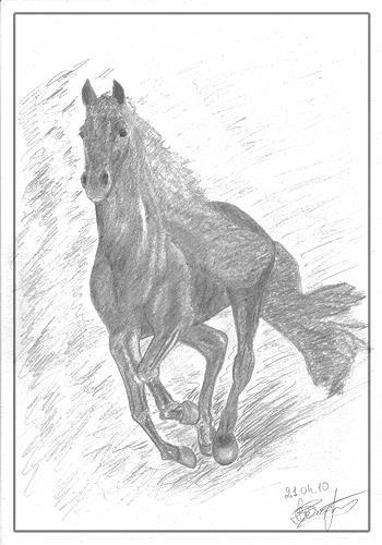 Micborn, Das Pferd, Tiere: Land, Bewegung