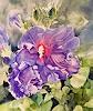 Stephanie Zobrist, Hibiskus, Landschaft: Frühling, Pflanzen: Blumen, Naturalismus