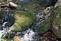 Ralf-H.-G.-Schumacher-Natur-Wald