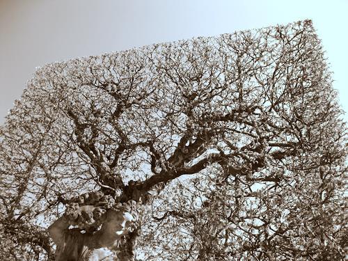 Renée König, Parkgeometrie, Landschaft: Frühling, Pflanzen: Bäume, Gegenwartskunst, Abstrakter Expressionismus