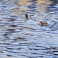 Daniel-Gerhard-Natur-Wasser-Tiere-Wasser