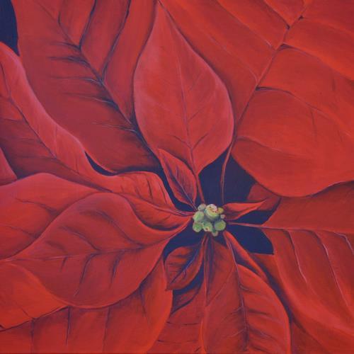 Daniel Gerhard, Weihnachtsstern, Pflanzen: Blumen, Zeiten: Winter