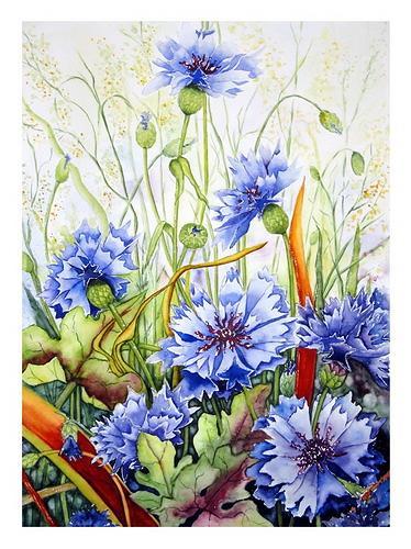 kornblumen von maria inhoven pflanzen blumen natur erde malerei. Black Bedroom Furniture Sets. Home Design Ideas