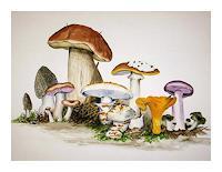 Maria-Inhoven-Diverse-Pflanzen-Natur-Erde-Moderne-Naturalismus