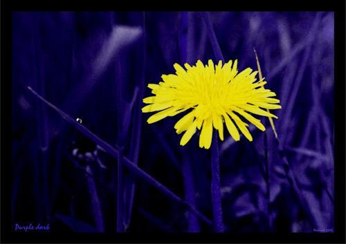 Hubi, Purple dark, Pflanzen: Blumen, Natur: Diverse, Naturalismus, Expressionismus