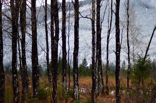 Katharina Orlowska, am Ödensee, Landschaft: Herbst, Natur: Wald, Expressionismus
