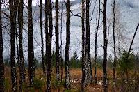 Katharina-Orlowska-Landschaft-Herbst-Natur-Wald