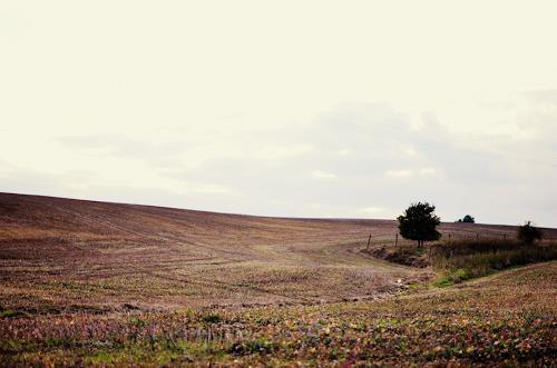 Katharina Orlowska, home is where your heart is, Landschaft: Hügel, Landschaft: Herbst